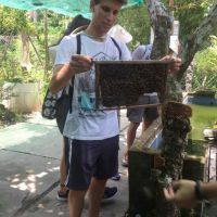 Looking at a beenest - How local people make honey in Mekong Delta trip with ALO Travel Asia
