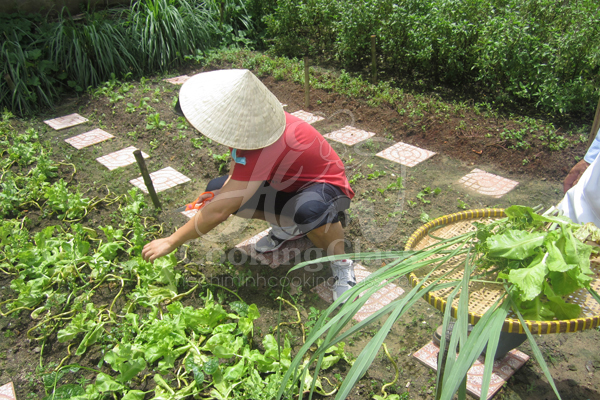 HCM Cooking Class & Cu Chi tunnels