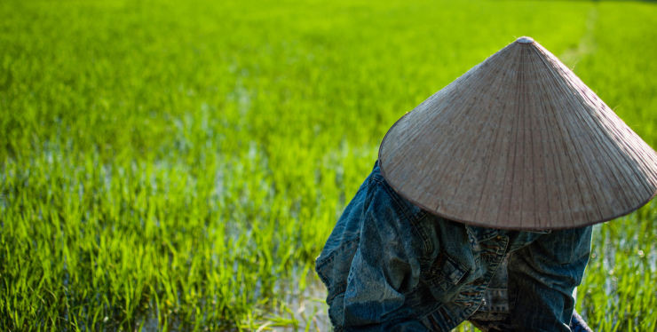 Hoi An – RICE FARMING TOUR