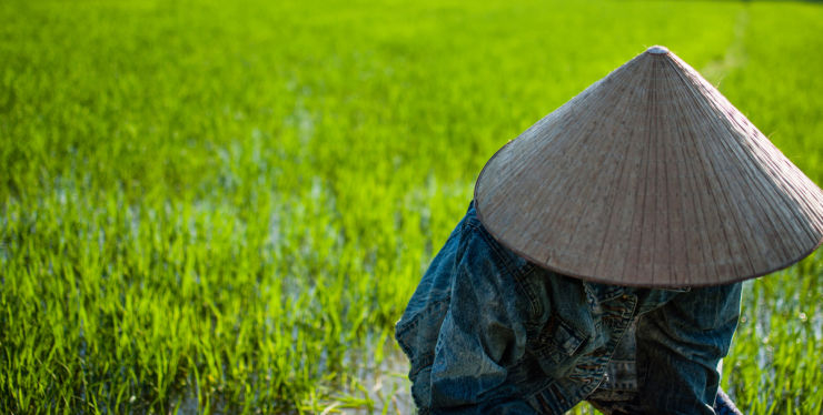 Hoi An – Rice Culture