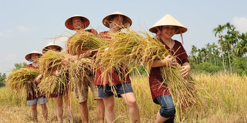 WET RICE FARM CULTURE