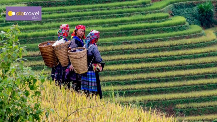 Sapa Short Trek – Homestay